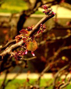 FRIDAY ✨  Le dernier jour avant le week-end, vite vite !   #friday #nofilter #photooftheday #photography #flowers #nature