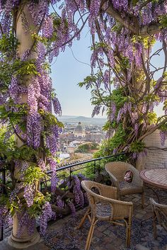 "Wisteria covered patio in Granada, Andalusia, Spain. ""Wisteria woke me this morning, And there was all June in the garden. Beautiful World, Beautiful Gardens, Beautiful Places, Beautiful Pictures, Beautiful Scenery, Amazing Places, Plantation, Dream Vacations, Garden Landscaping"