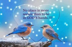 Wisdom Quotes God's answers are wiser than our… Christian Quotes . Beautiful Soul, Beautiful Birds, Beautiful Pictures, Beautiful Things, Inspirational Thoughts, Inspiring Quotes, Uplifting Quotes, Uplifting Thoughts, Inspiring Pictures