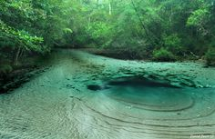 """Florida, North of Panama City, Econfina Creek. """"If you paddle one river in the panhandle, this should be at the top of your list. Florida Vacation, Florida Travel, Vacation Places, Dream Vacations, Vacation Spots, Places To Travel, Panama City Florida, Panama City Beach, Florida Springs"""