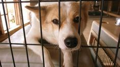 """There is a need to improve the current situation Tokyo to take the lead in a number of dogs and cats are slaughtered. For those who become new Governor, I would like you are working on this challenge means. Please be the first city in Japan to achieve """"zero"""" slaughter, Tokyo!"""