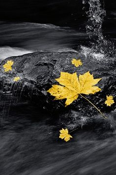 #color #yellow fall leaf