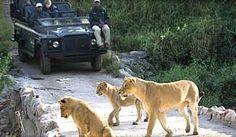 Kruger National Park - Wildlife Safari Destination: South Africa