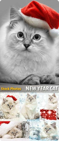 Christmas cat - Gatos en navidad