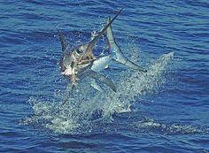 Deep Sea Fishing in Islamorada in the Florida Keys
