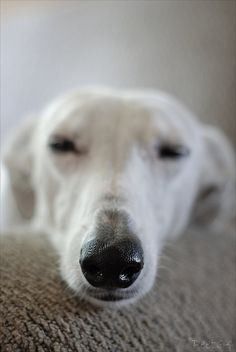 Awww. . . That is a kissie nose