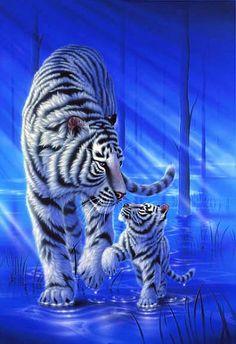 Steps on the Water - White tiger by Kentaro Nishino