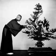 The art of bonsai, 1951 by Werner Bischof