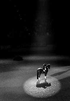 In the spotlight Extravaganza Horse Shows & Performances Learn about #HorseHealth #HorseColic www.loveyour.horse