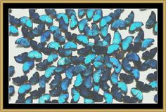Flock Of Butterfly [BUTC-03] - $16.00 : Mystic Stitch Inc, The fine art of counted cross stitch patterns