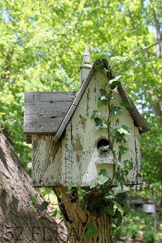 Birdhouse on top of old apple tree trunk, plus vine