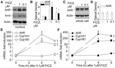 figure 2   melanocyte biology and skin pigmentation