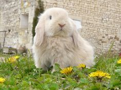 There are many different breeds of dwarf rabbits as well as non pure-bred rabbits that aren't in any way less cute. The breeds range from the Netherland Dutch (the smallest at 500g-1.5kg) to …
