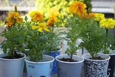 Super Easy Kids Project: Coffee Cup Marigolds - Garden Collage