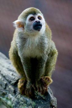 'Jaziquima' es la nueva exhibición de primates inaugurada esta semana en el Zoológico de Cali.