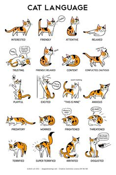 Cat body language with other cats cat ears flattened sideways,cat posture meaning how to learn cat language,what does cat behavior mean what does it mean when cats ears go back. I Love Cats, Crazy Cats, Cute Cats, Funny Cats, Adorable Kittens, 9gag Funny, Funny Laugh, Cat Body, Cat Hacks