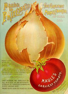 Maule's seed catalogue : 1894