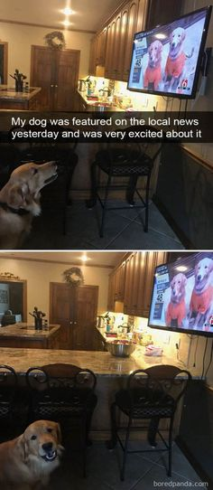 Dog Pictures Meme Dump Of The Day - 19 #dogsfunnycomics