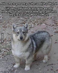 Why does no one pay attention to these cute guys? #9gag by 9gag