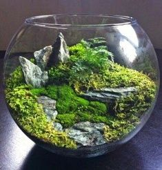Terrarium gardening is a pleasant way for a frustrated gardener to still have landscape to care for in the dead of winter. You can create your own terrarium gardening. Succulents Garden, Garden Plants, Indoor Plants, Succulent Planters, Balcony Garden, Hanging Planters, Air Plants, Cactus Plants, House Plants