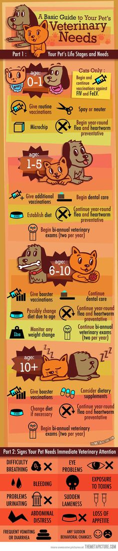 What your pet needs…Every pet owner should have a general guide like this