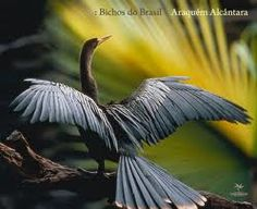 """Canon Brasil with Araquém Alcântara, Shows """"Wildlife Photography"""" from a Career in Wildlife Photography with how to capture the exuberance and beauty of Nature in Images, Araquém Alcântara Shares his career and experiences as a Wildlife Photographer. Araquem Alcantara, Great Photographers, Wildlife Photography, Beautiful Birds, Animal Kingdom, Documentaries, National Parks, Cute Animals, Creatures"""