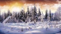 Cloud ,  Earth,   Sky  , Snow,   Tree