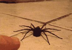 But WHY may I ask in the right mind WOULD YOU TOUCH A SPIDER