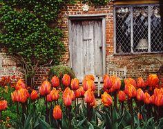 Tulips at Sissinghurst by Richard Walker on 500px