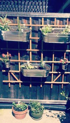 small backyard herb garden perfection.