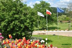 #Olandia #Poland #European_Union - 3 flags with tulips