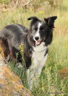 Meeker Sheepdog Trials Photo Gallery,Ellen Robinson