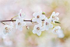 Spring Awakening  by Jacky Parker on 500px