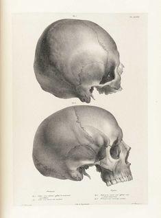 Author: Vimont, Joseph (1795-1857).  Title: Traité de phrénologie humaine et comparée.  Publication Information: Paris: J. B. Baillière, 1832-35.
