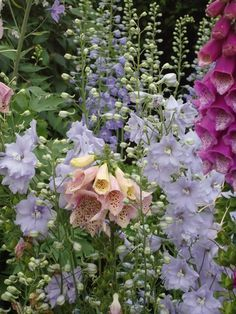 Foxglove & blue delphinium are shy in the sun. Shade is much better for these delicate flowers. The foxglove can handle a little more heat/sun than delphinium. Delphinium Azul, Delphiniums, Delphinium Flowers, Orchids, Garden Cottage, English Cottage Gardens, Fairytale Cottage, English Cottages, Hollyhock