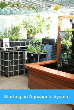 If you've been looking into aquaponics and need some more advice and information on getting your system started, our article should cover all your queries.