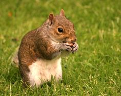 1000+ images about Squirrel repellents on Pinterest