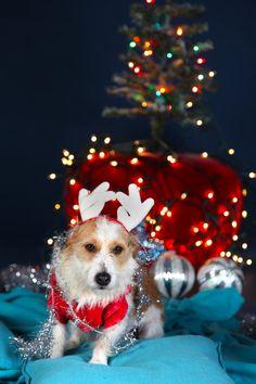 #Christmas #photoshoot #capetown