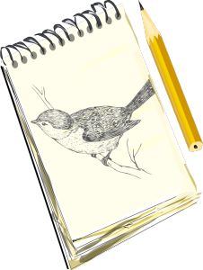 Late winter and early spring are great times for bird watching and bird listening. The song birds are beginning to sing, and bird activity increases, with migrating birds returning and birds prepar… Drawing Sketches, Pencil Drawings, Art Drawings, Bird Clipart, Bird Migration, Drawing Exercises, Crayon, Bird Watching, Deco