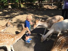 Wisconsin Deer Park, Wisconsin Dells: See 1,014 reviews, articles, and 373 photos of Wisconsin Deer Park, ranked No.3 on TripAdvisor among 75 attractions in Wisconsin Dells.