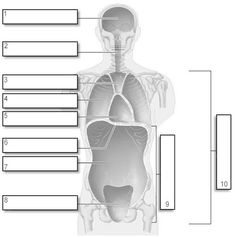 76179713900ff1350f305b0bb5a0f520 anatomy and physiology anatomy study blank body cavities diagram front view introduction to electrical
