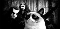 Norwegian metal Grumpy Cat ~ Cat of Northern Darkness Black Metal, Nu Metal, Crazy Cat Lady, Crazy Cats, Funny Cats, Funny Animals, Grumpy Cats, Animal Jokes, Metal Meme