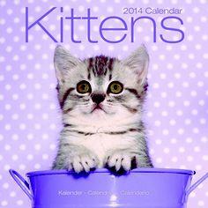 Dates, Kittens, Calendar, Photographs, Contemporary, Studio, Birthday, Room, Animals