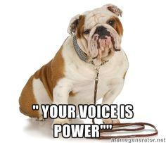 Municipality Watchdog - Bull Dog via Meme Generator