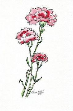 Features – Ink, ink and pen, ink and watercolor, ink and. Carnation Drawing, Carnation Flower Tattoo, Flower Tattoos, Flower Art, Watercolor Journal, Watercolor And Ink, Watercolor Flowers, Watercolor Paintings, Pink Carnations