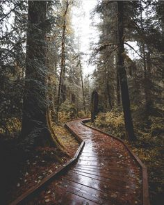 "Polubienia: 660, komentarze: 2 – @divine_forest na Instagramie: ""presents __________________________ @zackkcore __________________________ Thank you for sharing…"""