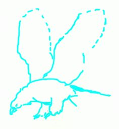 Exam Guide Online - How to Draw a Bald Eagle.