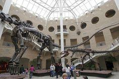 Giants of the Mesozoic (Argentinosaurus & Giganotosaurus)