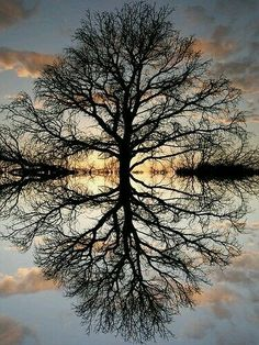 Nature Photo: This Photo was uploaded by loveej. Find other Nature pictures and photos or upload your own with Photobucket free image and video hosting . Water Reflections, Tree Art, Nature Pictures, Pictures Of Trees, Photos Of Nature, Calming Pictures, Amazing Nature, Belle Photo, Pretty Pictures
