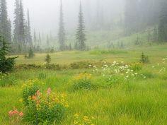 Beautiful Meadow wallpapers | HD meadows desktop wallpapers ...